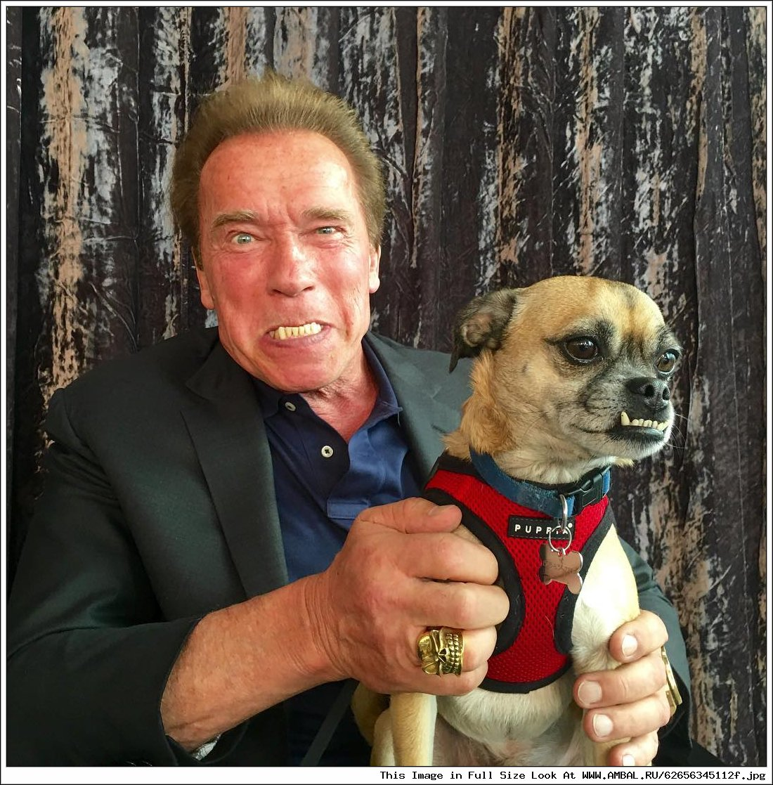 Arnold schwarzenegger fuck hardcore movies